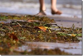 2011-04-09 Beach 042