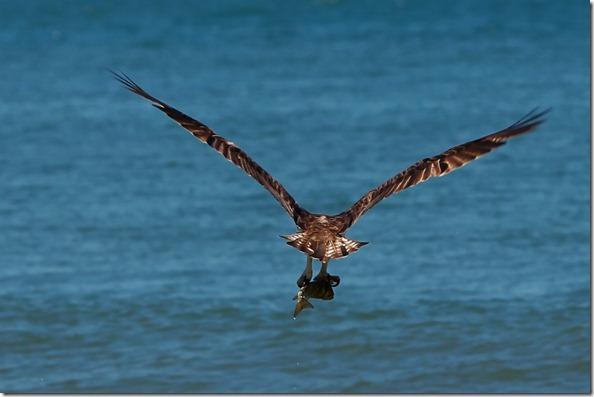 2011-11-27 Beach 2638