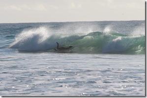 2014-08-09 Kokoda Classic Gold Coast 018